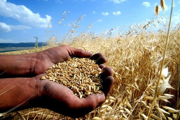 tarım sigortası