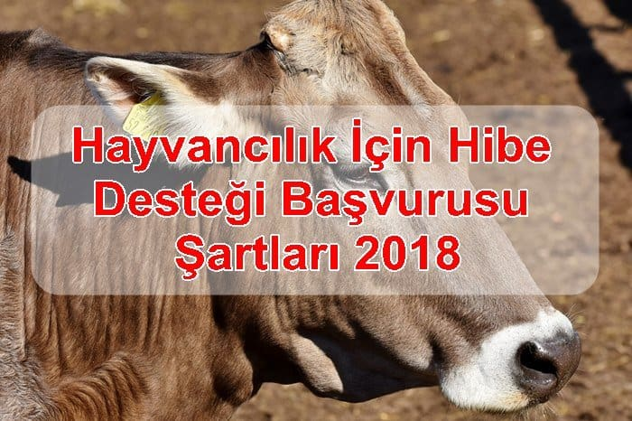 Photo of Hayvancılık İçin Hibe Desteği Başvurusu ve Şartları 2018